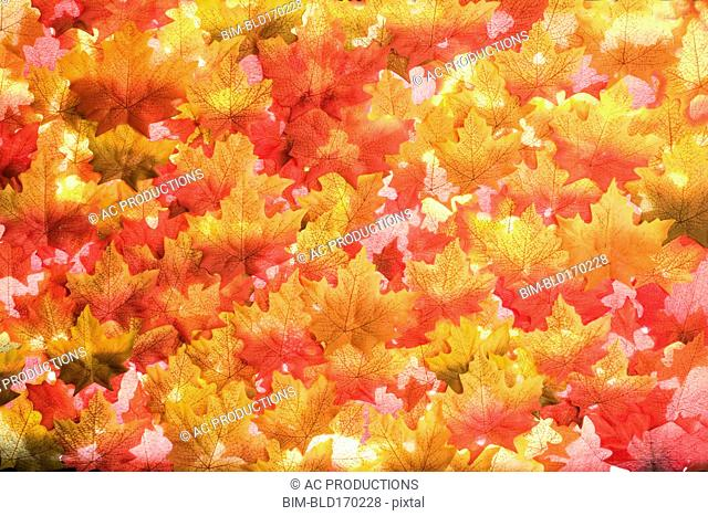 Close up of pile of autumn leaves