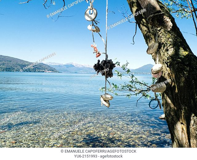 Shells and pine cones hanging from a willow tree on the shore of Lake Maggiore, Ranchi, Lombardy, Italy