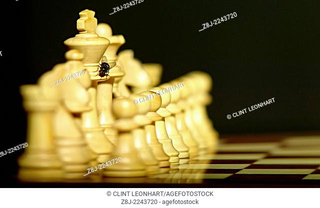 Fly in chess