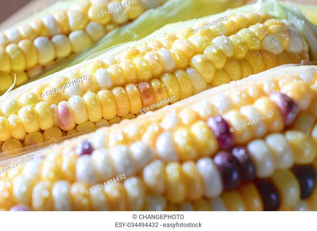 Fresh organic corn on cob on farmers