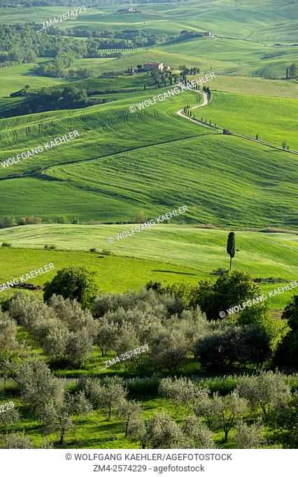 View of the Val d'Orcia near Pienza in Tuscany, Italy with Italian cypress trees (Cupressus sempervirens) and gravel road going to a farm house
