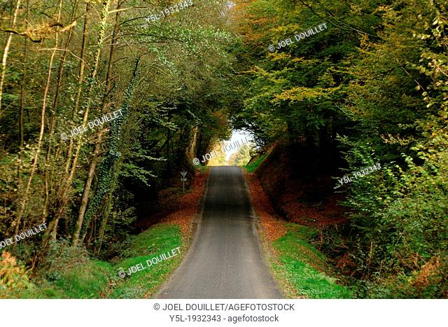 A little road in the Andaines forest, near Bagnoles de l'Orne, Normandy-Maine park (Orne, Normandy, France)