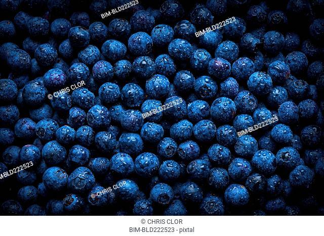 Pile of fresh wet blueberries