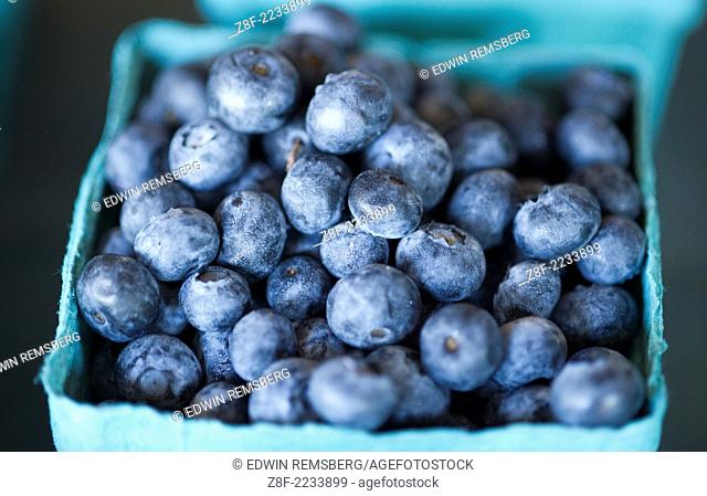 Blueberries in PA