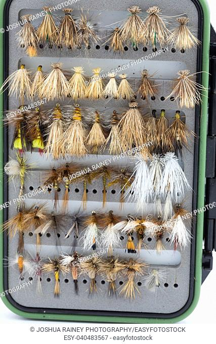 Dry flies in a fly box or case ready for fly fishing shot on a white isolated background in studio