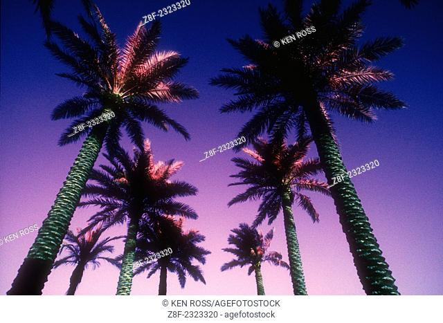 Palmtrees, Beverly Hills, California, USA