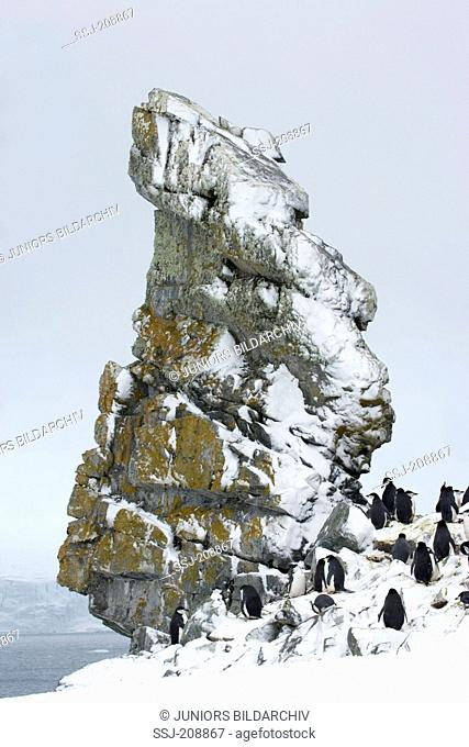 Chinstrap Penguin (Pygoscelis antarctica). Colony next to a snowy rock spire. Antarctic Peninsula. No exclusive sales !