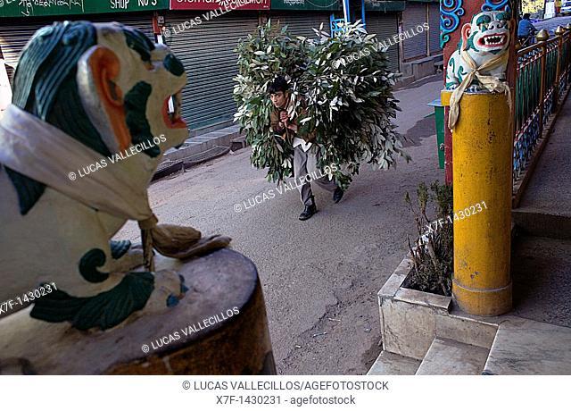Main Bazar street,McLeod Ganj, Dharamsala, Himachal Pradesh state, India, Asia