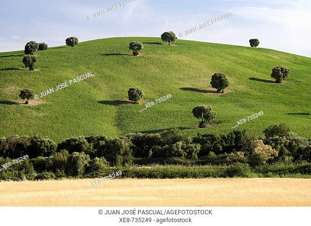 Country landscape near Arcos de la Frontera. Cadiz province, Andalucia, Spain