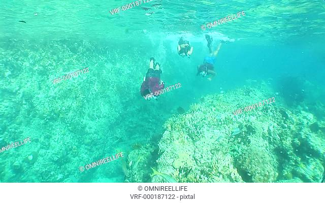 One teenage male and two teenage female snorkellers swimming above plants and corals on seabed