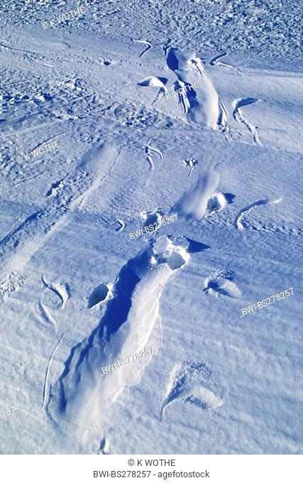 Emperor penguin Aptenodytes forsteri, Track of an Emperor Penguin tobboganing on ice, Antarctica, Weddell Sea