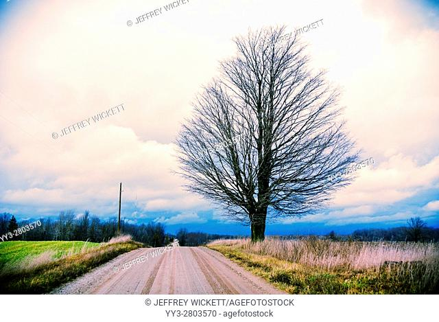Silhouette of bare tree beside country road near Ludington, Michigan, USA