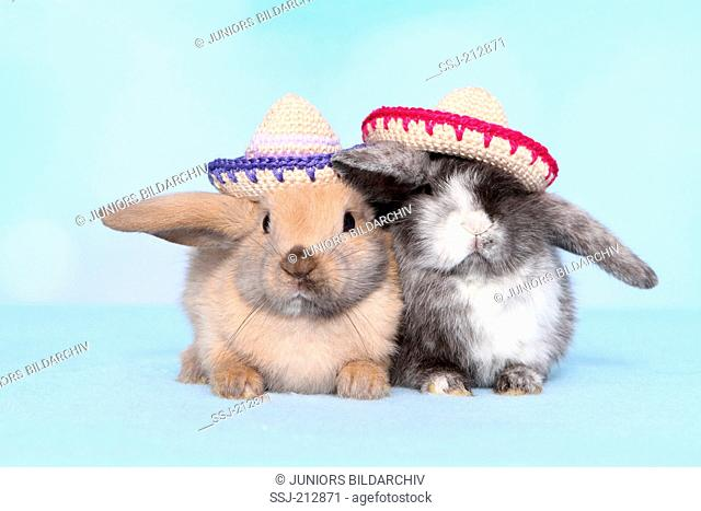 Dwarf rabbit. Two individuals wearing crocheted sombreros. Studio picture against a blue background