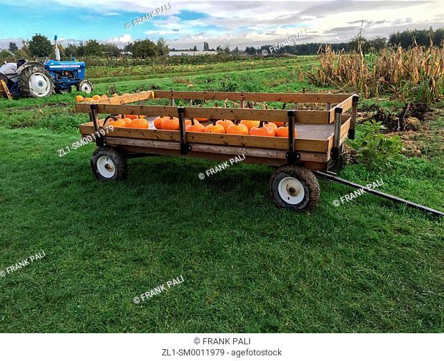 Farm wagon and pumpkins