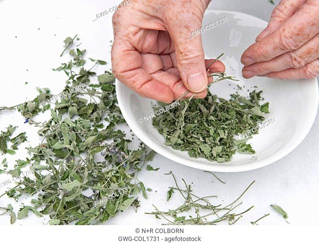 DRYING CATMINT - REMOVING STALKS FROM DRIED LEAVES
