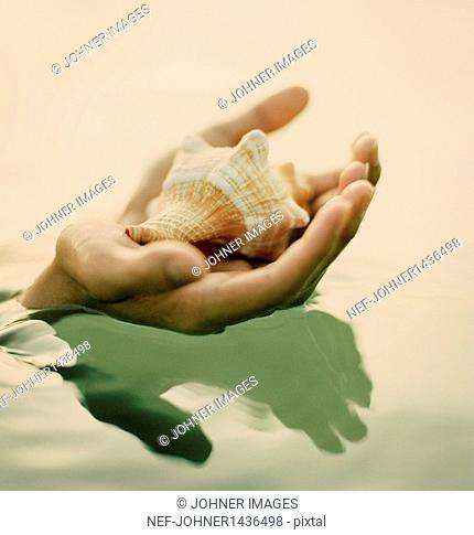 Hand holding seashell