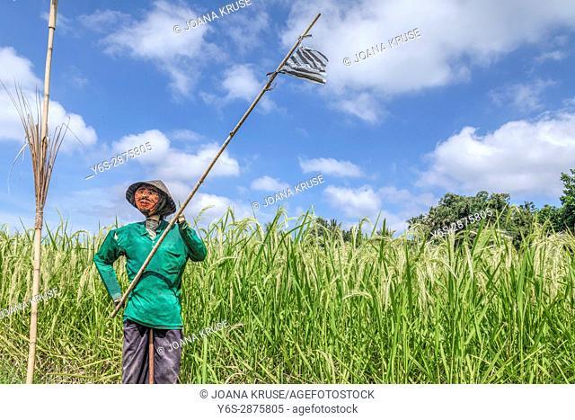 terraced rice fields, Jatiluwih, Bali, Indonesia, Asia