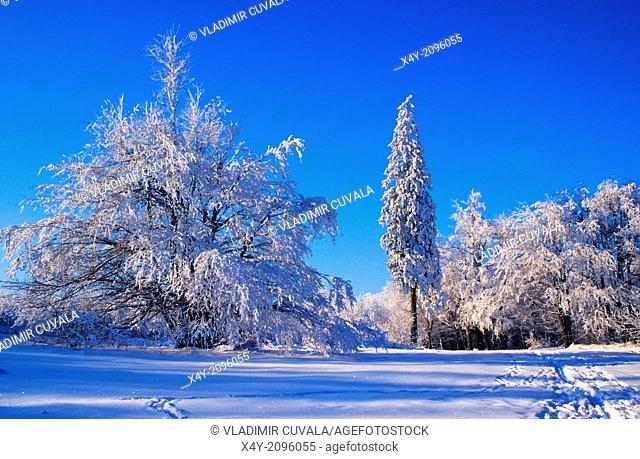 Winter scenery at Cermakova luka, Male Karpaty, Slovakia