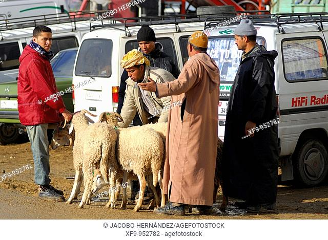 Livestock market for the Feast of the Lamb. Tetouan. Rif region. Morocco