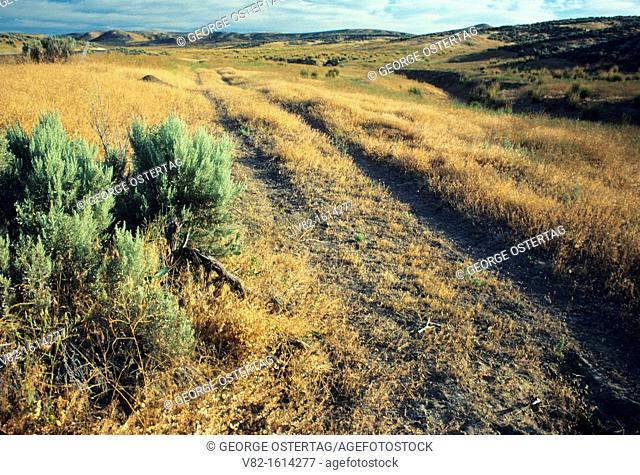 Oregon Trail ruts, Keeney Pass Historic District, Oregon Trail National Historic Trail, Vale District Bureau of Land Management, Oregon