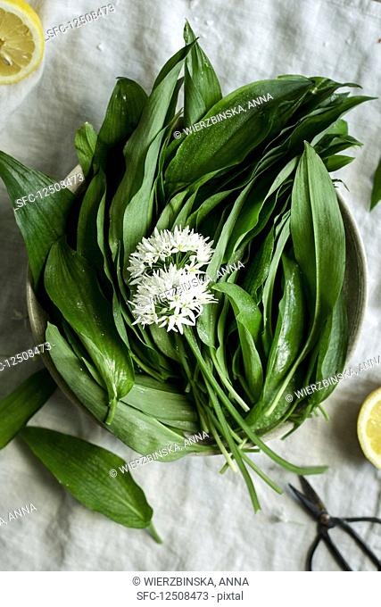 Bowl of wild garlic leaves with wild garlic flowers on a light surface