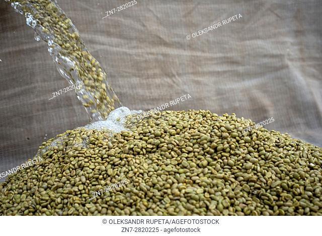 Coffee beans after cleaning process, Mubuyu farm, Zambia