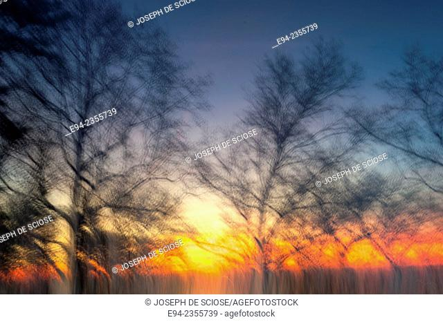 Winter sunset with bare trees silhouetted in the foreground