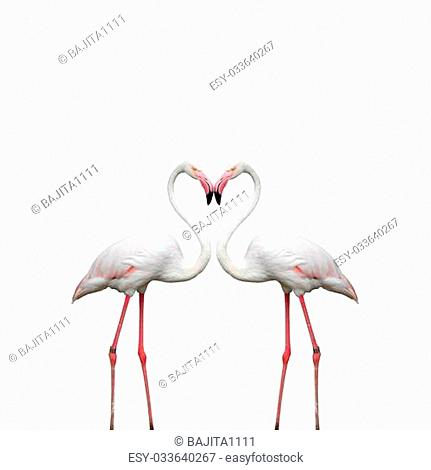 Two colorful flamingos looking at each other and building a hear