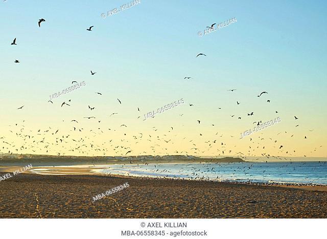 Beach, coast, morning mood, sunrise, flock of birds in the sky