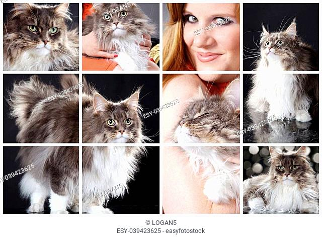 Woman with maine coon cat collage