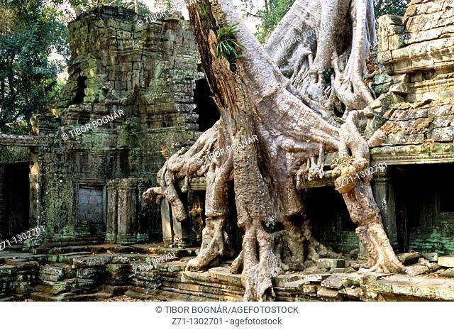Cambodia, Angkor, Preah Khan, tree growing on ruins