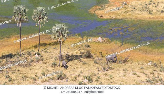Elephants in the Okavango delta (Botswana), aerial shot