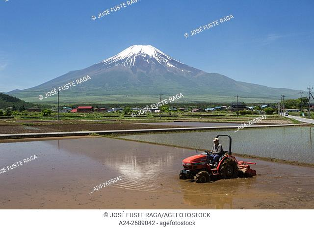 Japan, Yamanashi Province, Near Oshino Mura, rice field