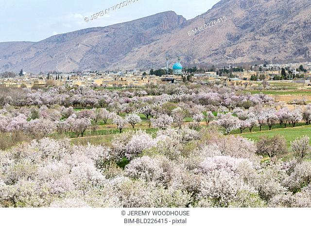 Orchard near mountains, Estahban, Iran
