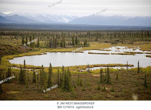 The boreal forest along the Denali Highway, a little-used 135-mile long mostly unpaved road which traverses the remote wilderness east of Denali National Park