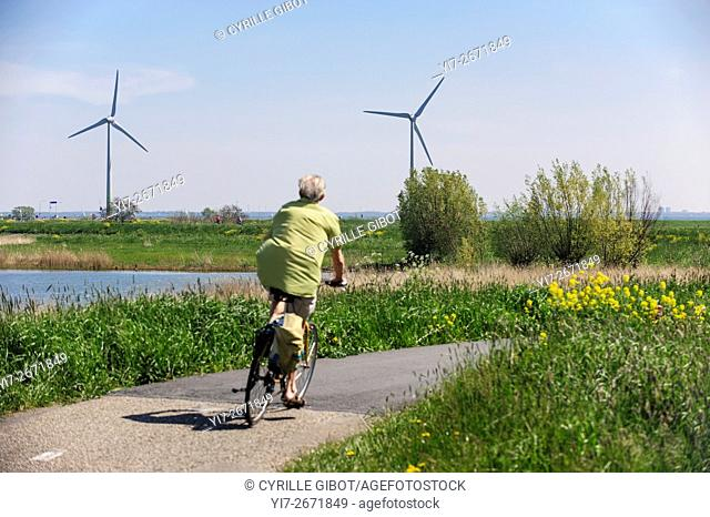 Mature man cycling in the countryside against background of wind turbines, North Holland, the Netherlands