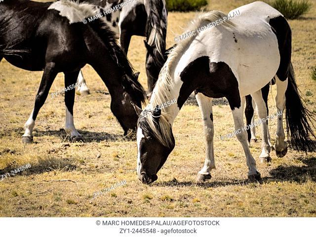 Wild horses in a field in Spain