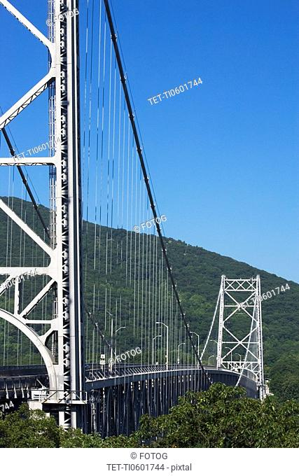 Cable bridge surrounded by trees