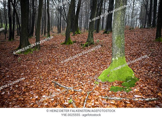 Traumatic forest