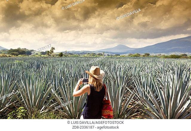 Agave fields in tequila región. Jalisco