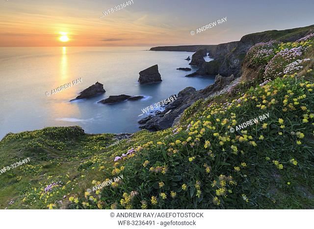 Spring flowers at the Bedruthan Steps in Cornwall captured shortly before sunset on an evening in mid May