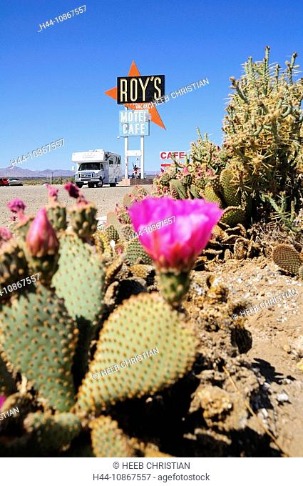 Cactus, flower, Roadbear RV Camper, caravan, Roy's Motel & Cafe, village Amboy, old Route 66, California, USA, America, North America, travel, street, café