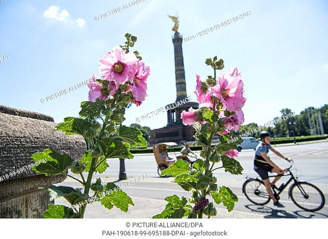 18 June 2019, Berlin: Mallows bloom on the Victory Column in sunny weather. Photo: Jörg Carstensen/dpa/ZB. - Berlin/Berlin/Germany