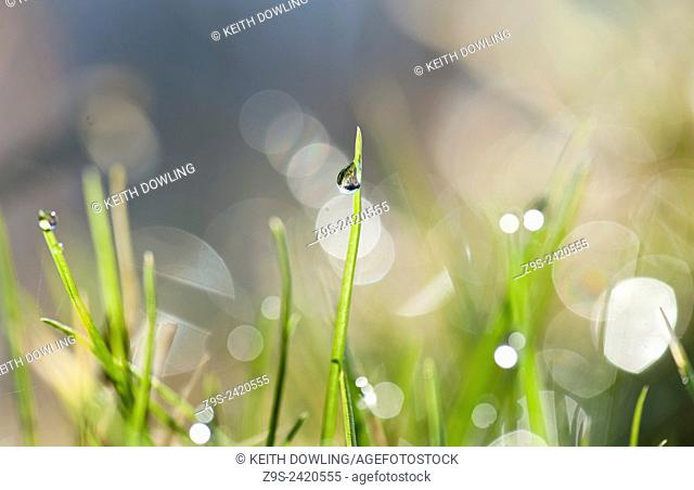 Dew drop sparkles with detail in Early Morning light on a blade of grass