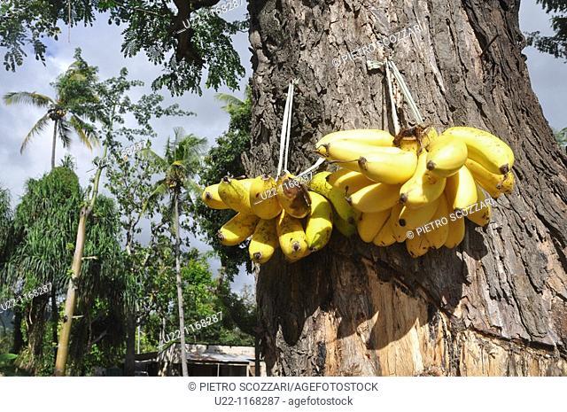 Dili (East Timor): bananas sold in the Leicidere neighborhood