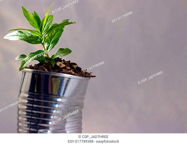 Tin can and young plant