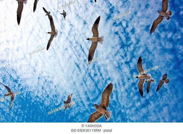 Birds flying in blue sky