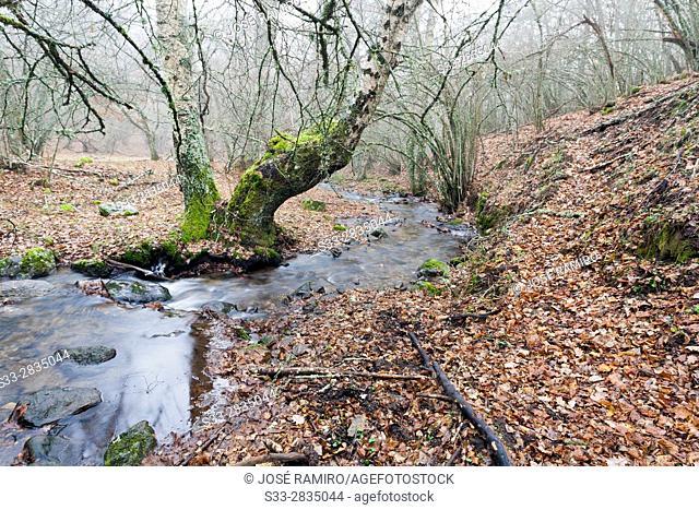Dehesa stream in Somosierra. Sierra Norte. Madrid. Spain. Europe