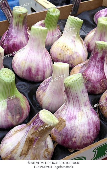 Violet garlic for sale at a french farmers' market