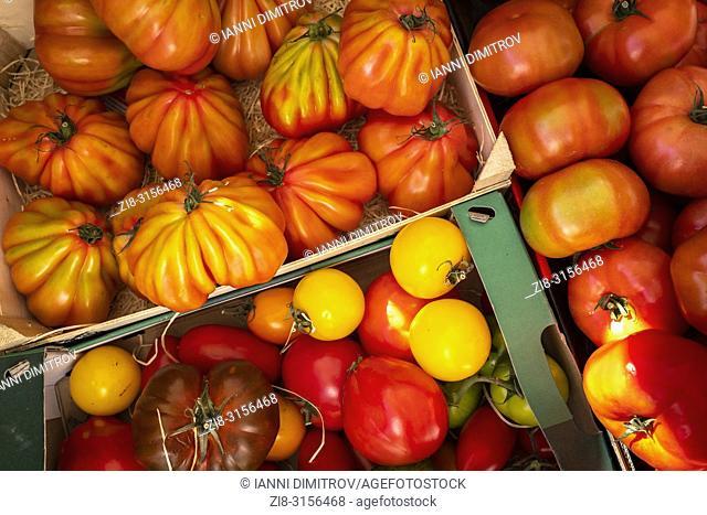 Fresh tomato varieties
